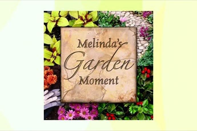 Garden Moment_-2170931641015187702