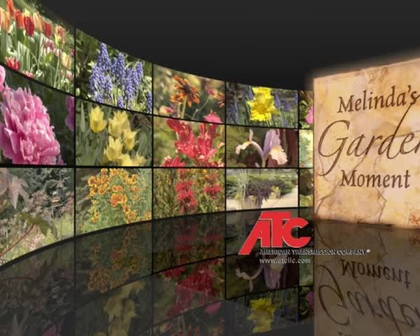 Melinda's Garden Moment: Capture Rainwater for the Garden wi
