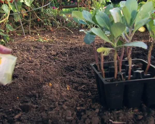 Melinda's Garden Moment: Space Saving Tips