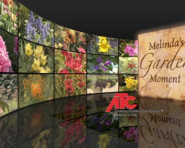 Melinda-s Garden moment Week 7_64581472