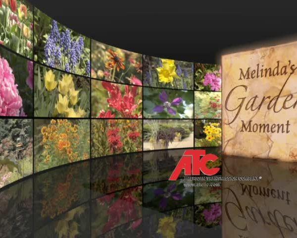 Melinda Garden Week 8_64641753