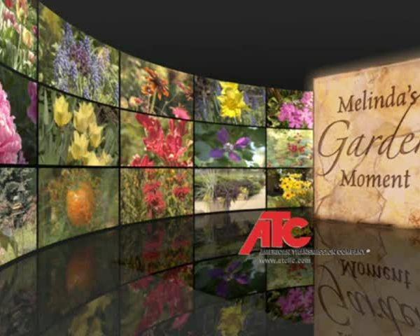 garden moment week 13_63775731