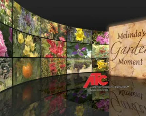 Melindas Garden Moment Week 14