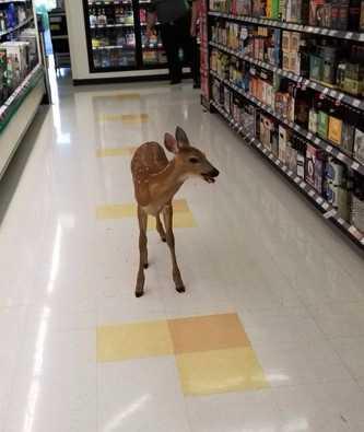 deer_1499775087911.jpg