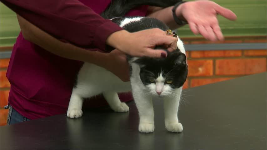 Pet Saver: Meet Lila