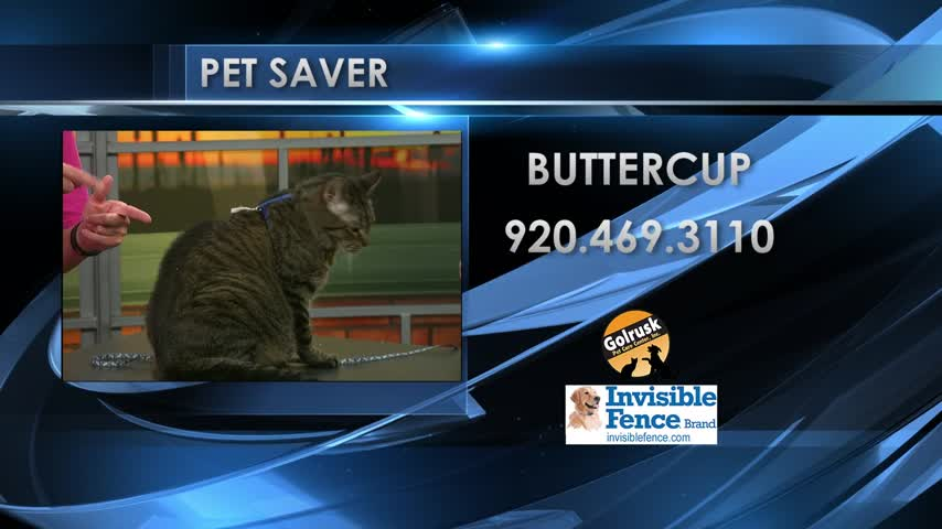 Pet Saver Buttercup
