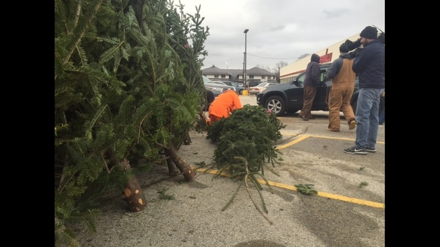 White House Christmas Tree to be selected from Shawano ...