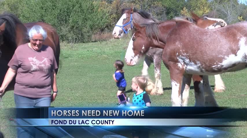 Non-profit organization-s horses needs new home_93834523