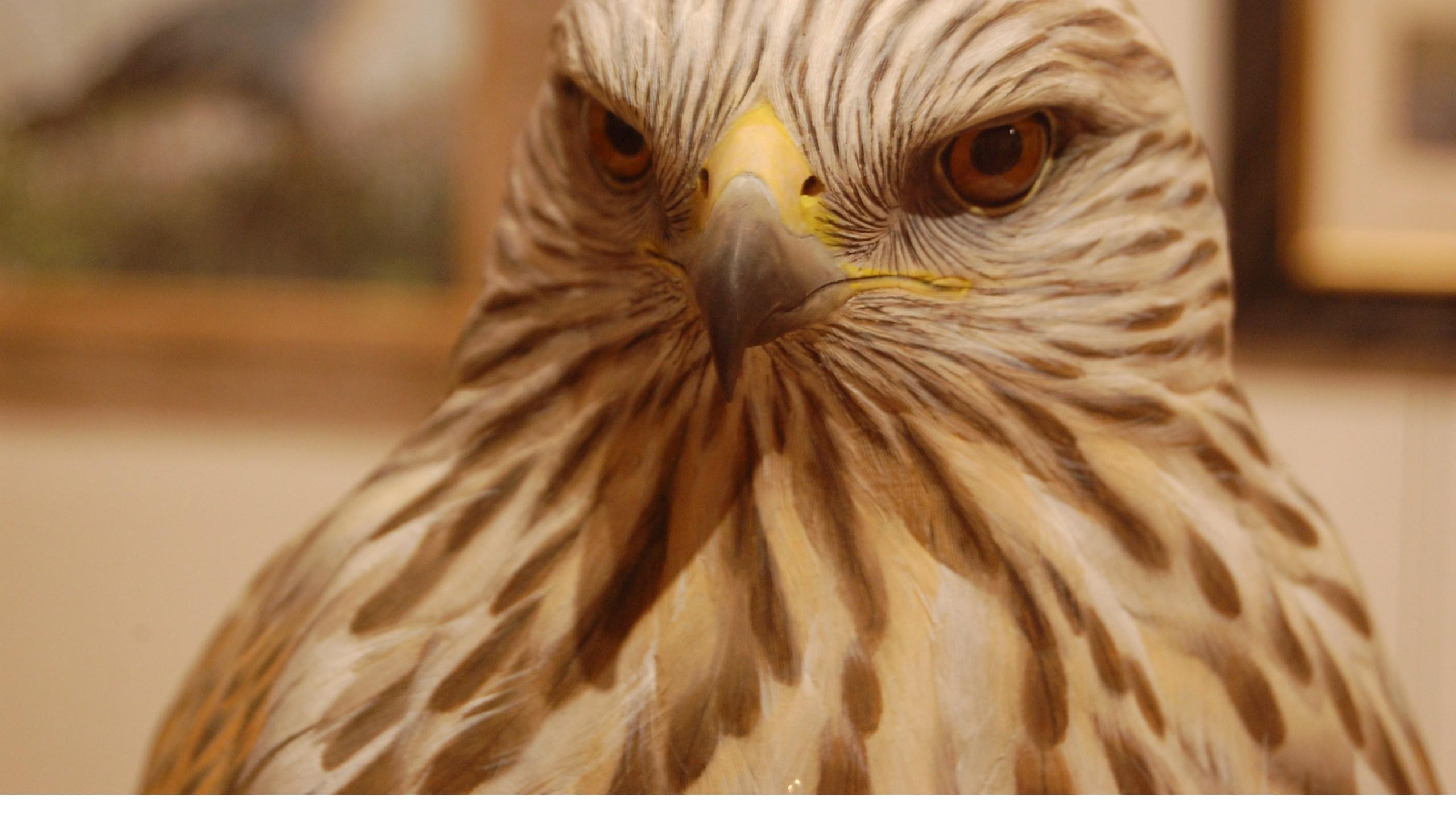 Woodson Art Museum Birds in Art 2017_1508236237886.JPG