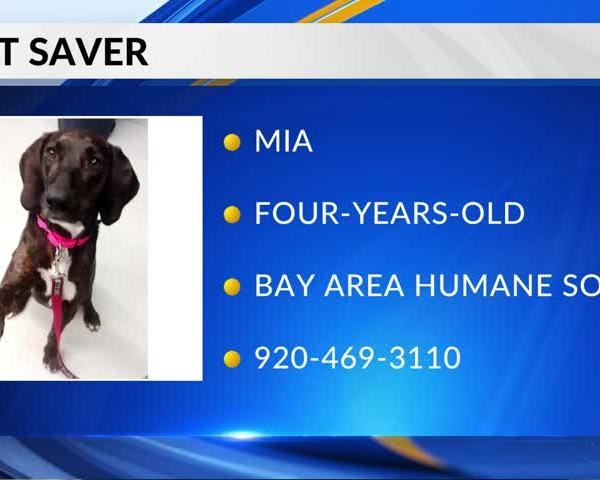 Pet Saver: Mia