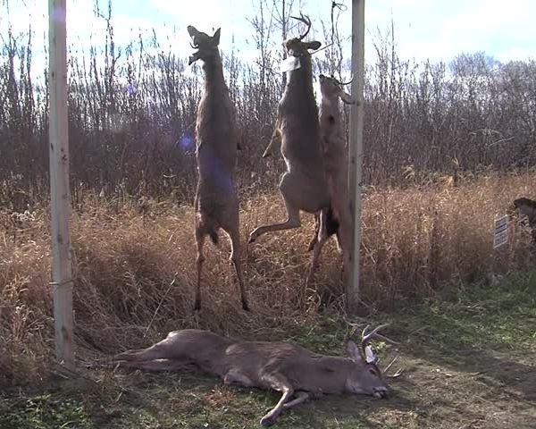 Gun Deer Dollars