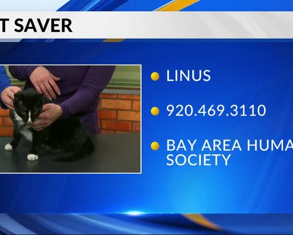 Pet Saver: Linus