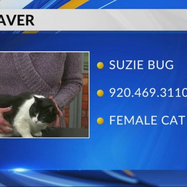 Petsaver: Suzie Bug