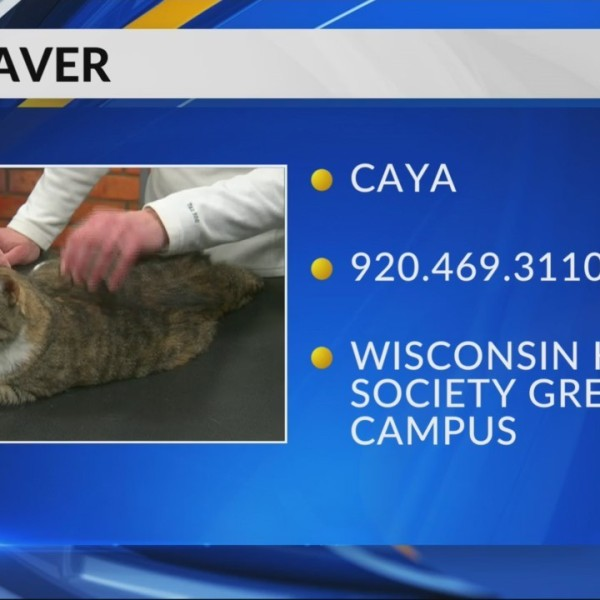 Pet Saver: Caya