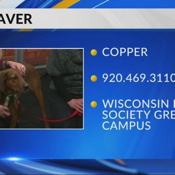 Petsaver: Copper