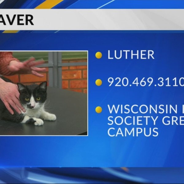 Petsaver: Luther