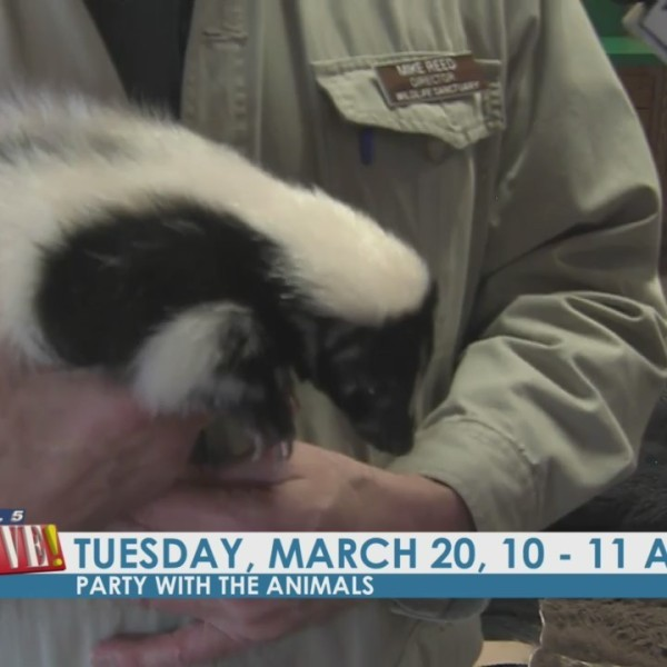Party with the Animals at the Bay Beach Wildlife Sanctuary