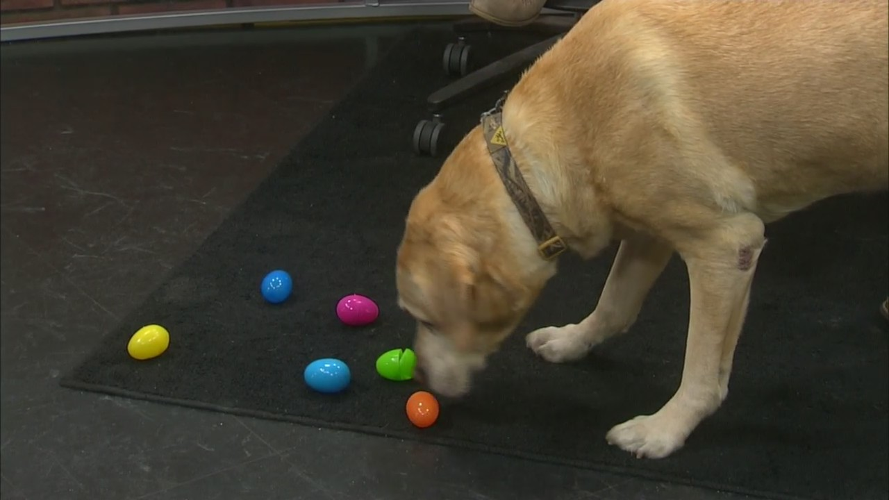 The Brown County Parks Department is hosting it's second annual dog Easter egg hunt at the Brown County Dog Park.