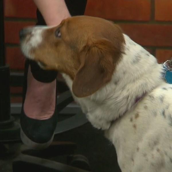 FVMPD Pet Adoption Day