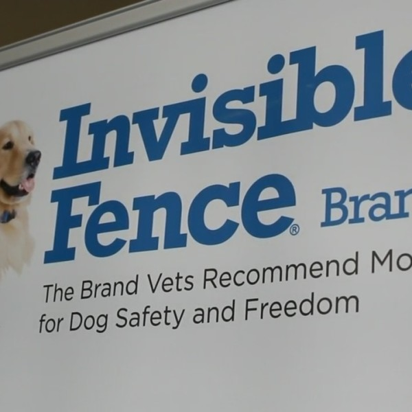 Your Local Experts: Invisible Fence by Golrusk National Lost Dog Awareness Day
