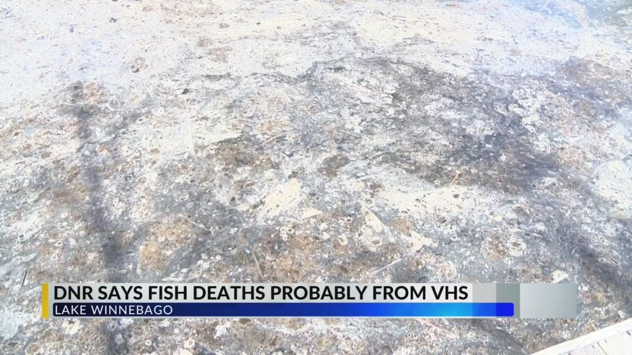 Lake Winnebago Dead Fish