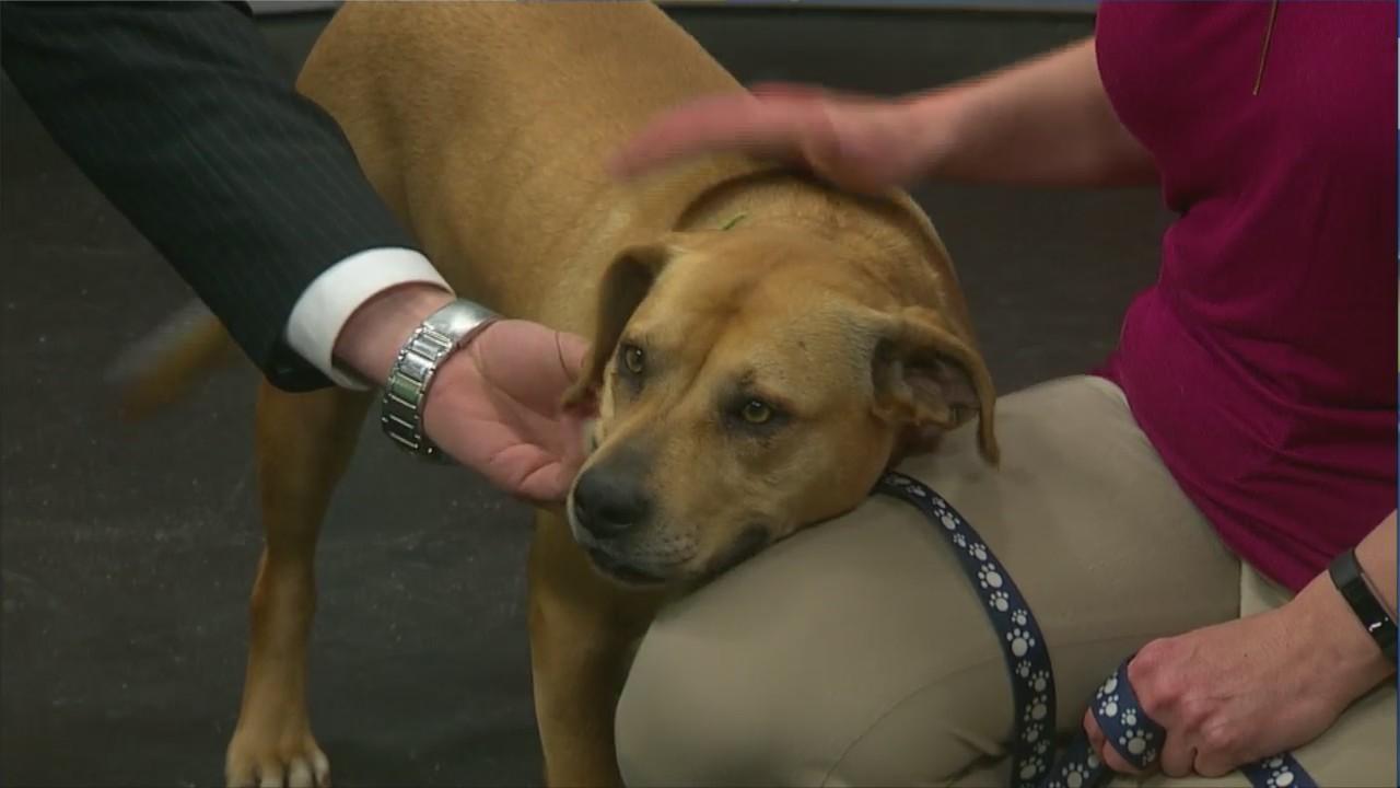 Pet Saver: Maxine
