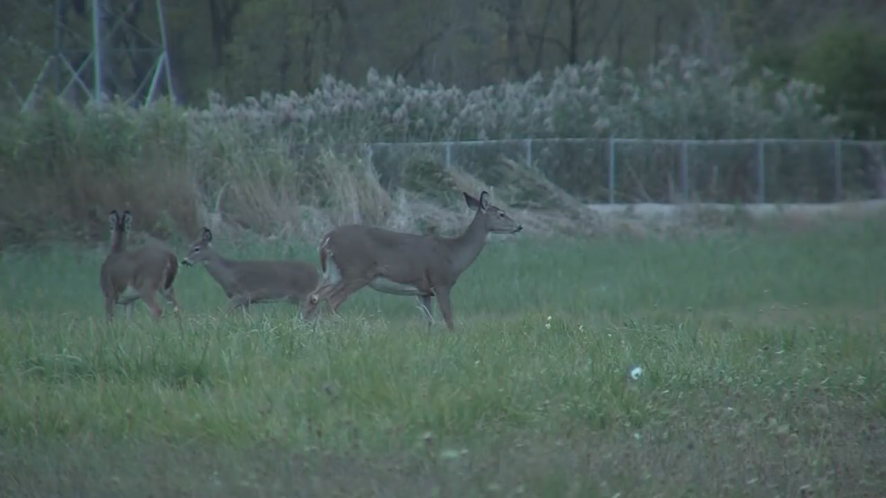 CWD in Marinette County