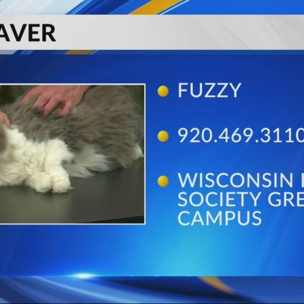 Petsaver: Fuzzy