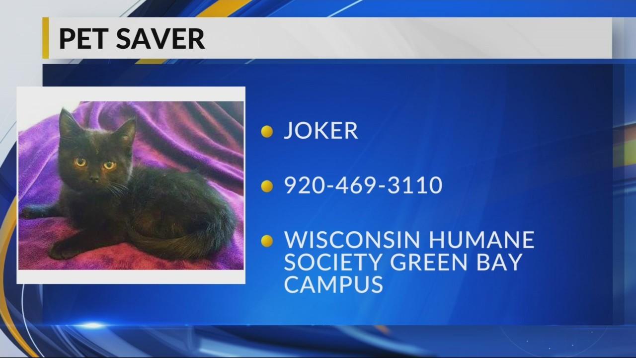 Pet Saver: Joker