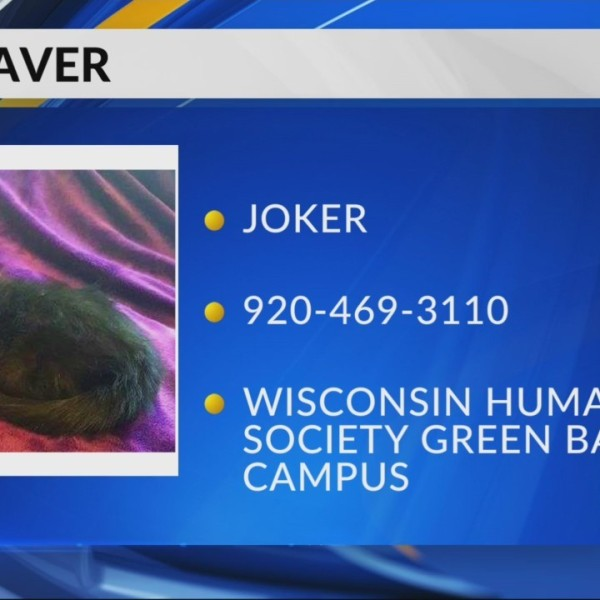 Pet Saver: Joker