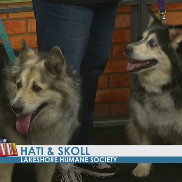 Your New Best Friends: Hati & Skoll