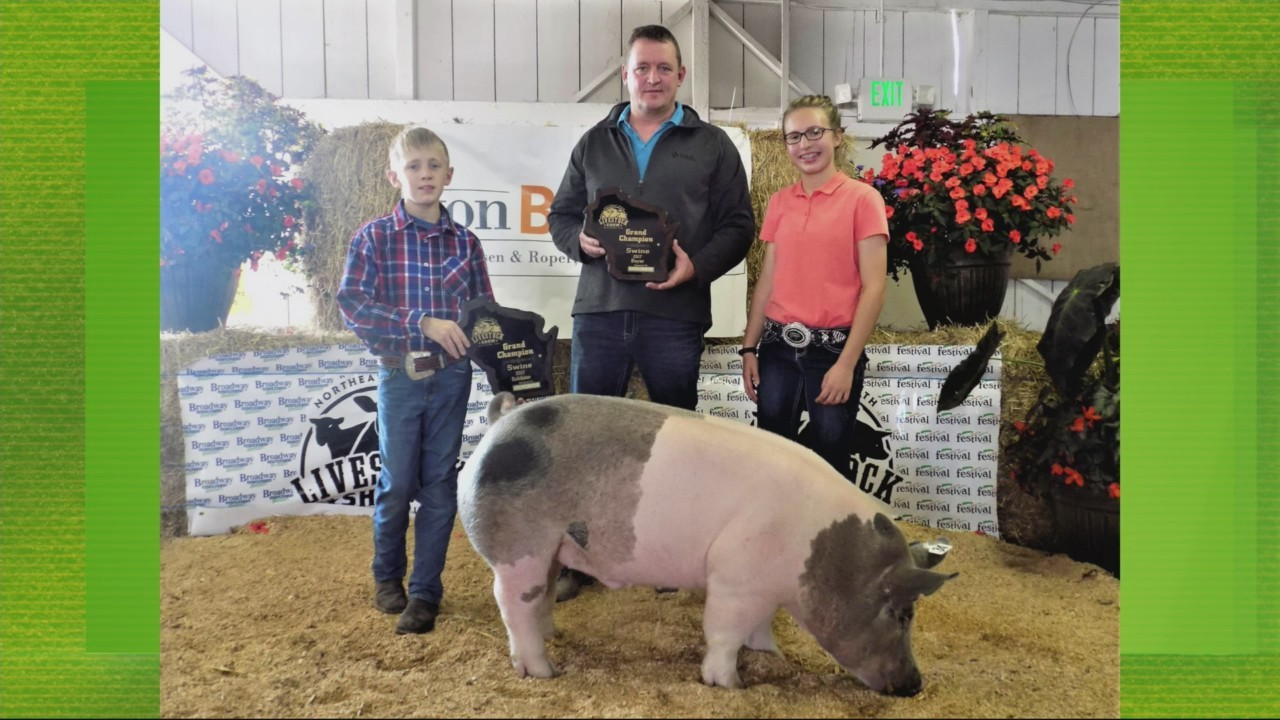 Youth Livestock Show