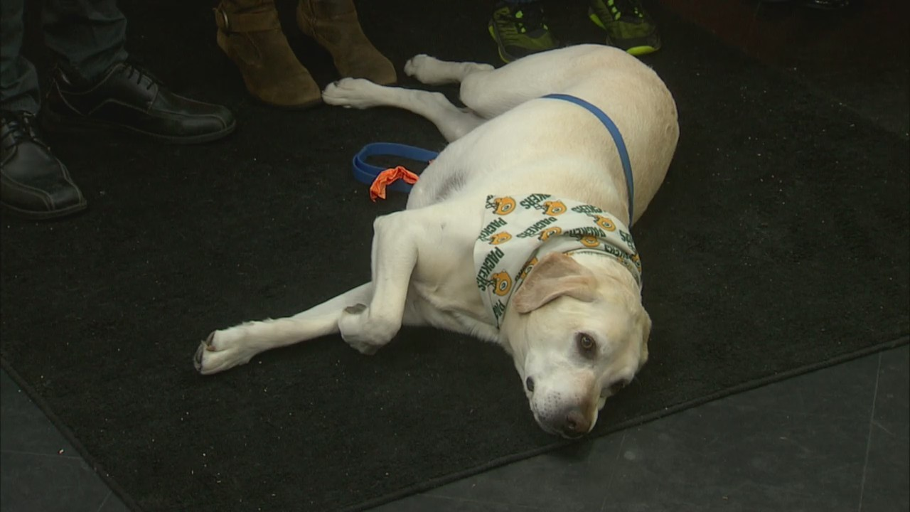 Oak Grove Dentistry Therapy Dog