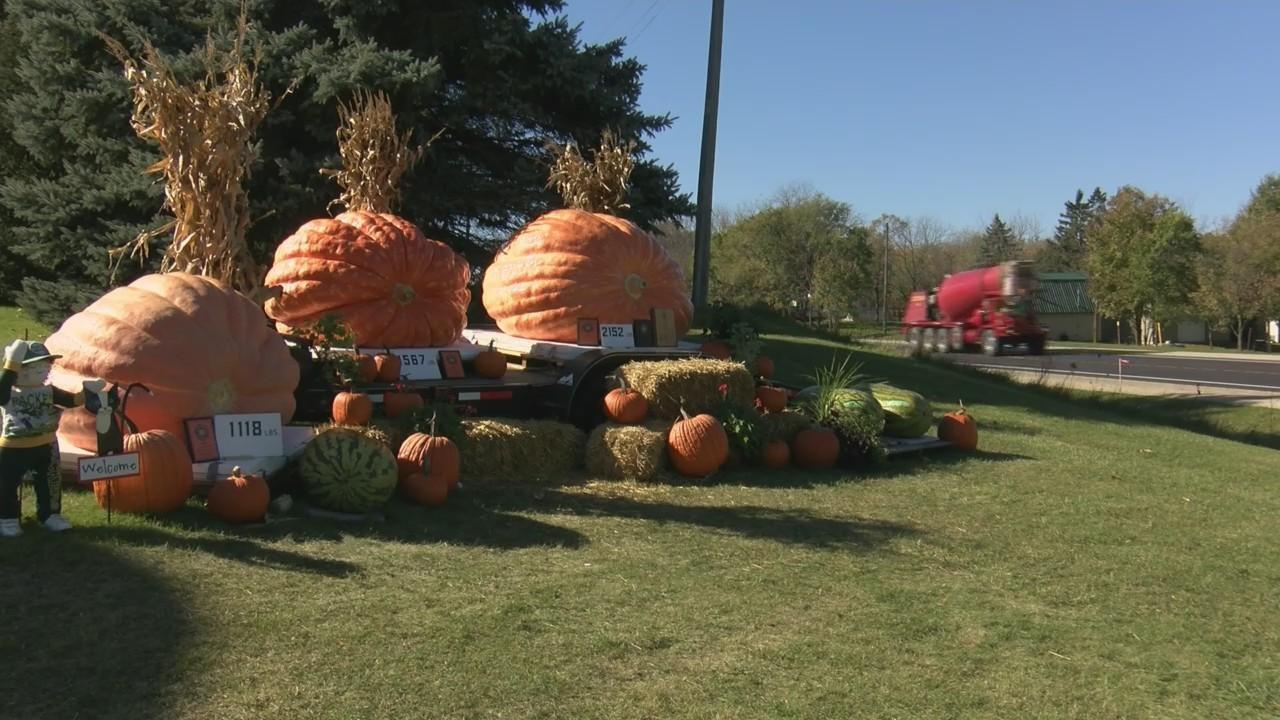 Winnebago County Award Winning Pumpkins