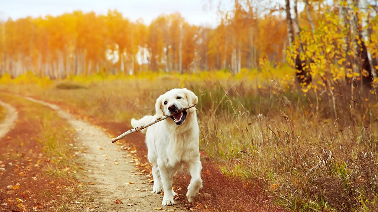 dog-animal-pet-outside-fall_1538412229066_404642_ver1_20181009055402-159532