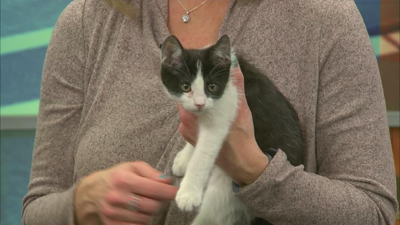 Pet Saver: Meet Lightning the Kitten