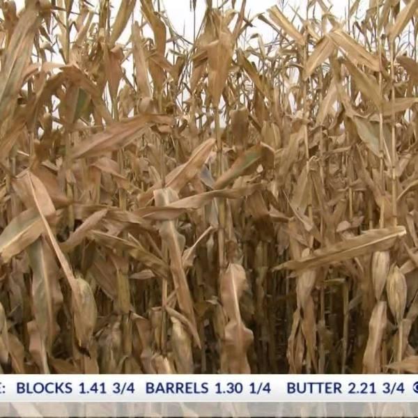 Will Farm Prices Rebound in 2019?