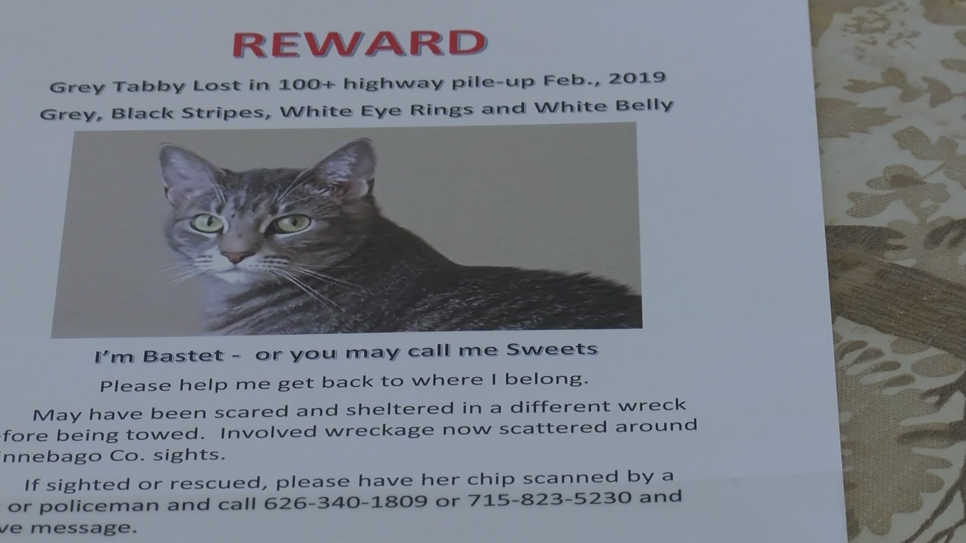 Family Searches for Cat After Pileup
