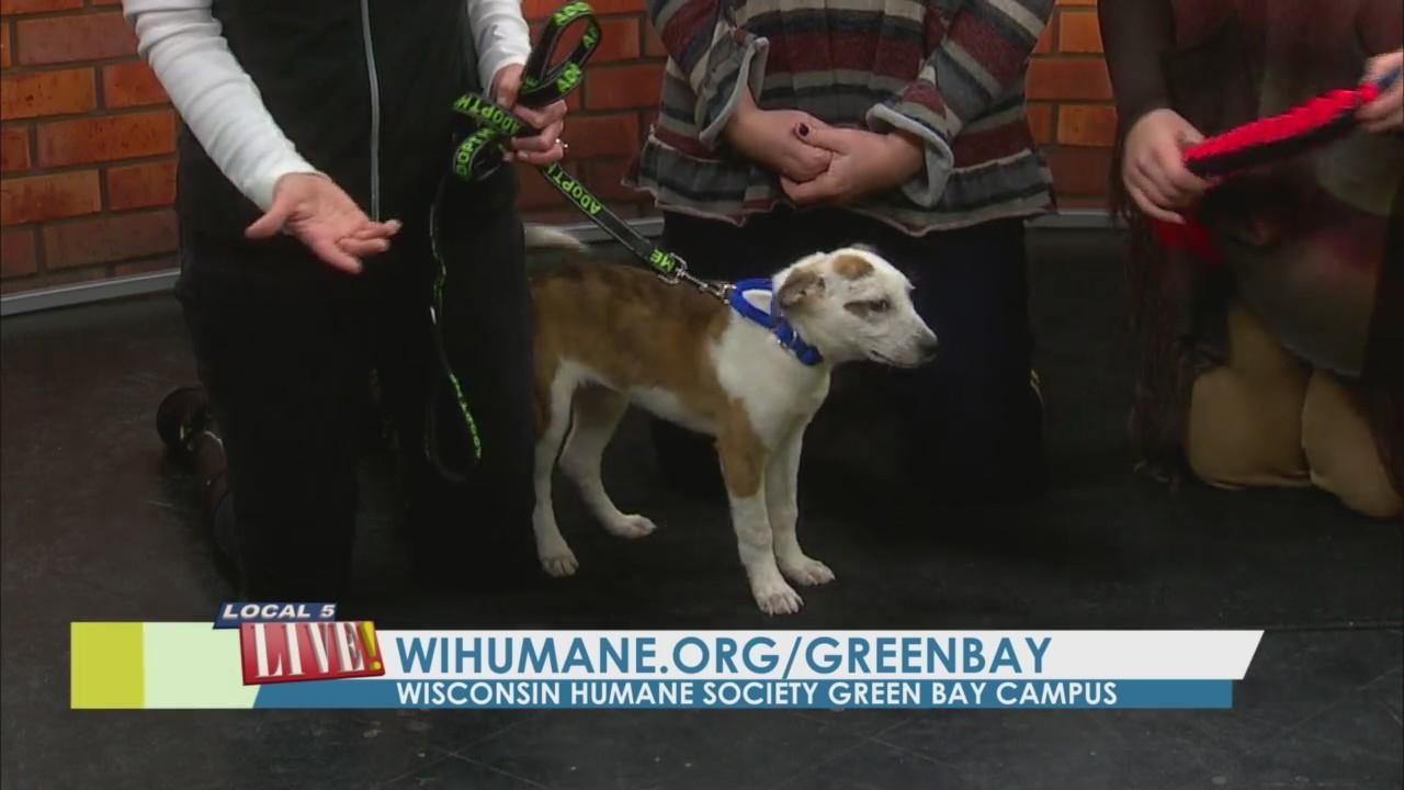 Meet Sal from Wisconsin Humane Society: Green Bay