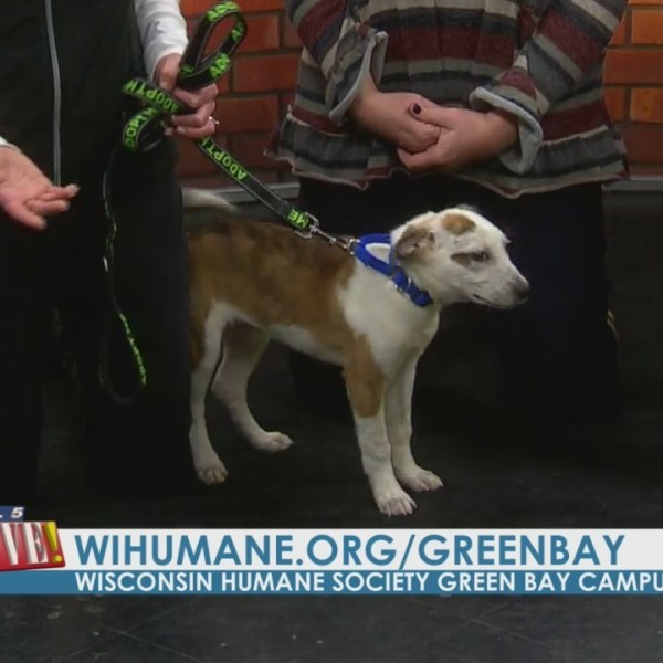 Meet Sal from Wisconsin Humane Society: Green Bay