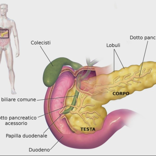 Your Health With Bellin: Pancreatitis Information