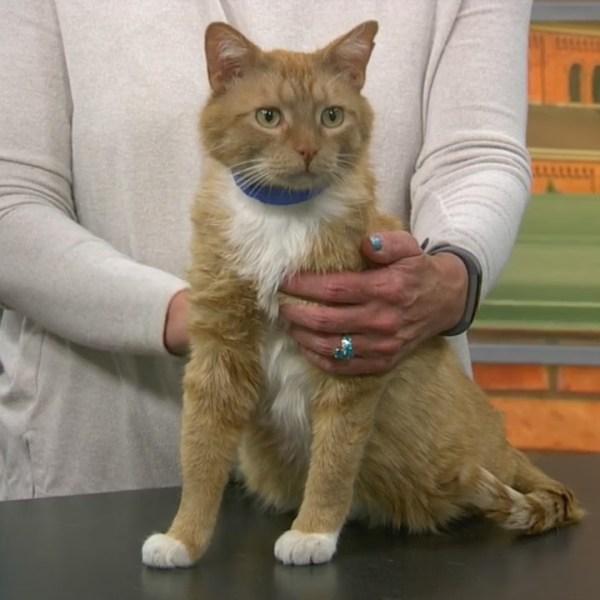 Pet Saver: Garfield the Sweet Cat