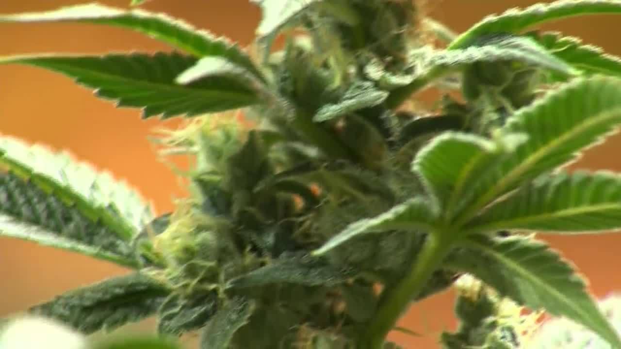 Marijuana_Bill_8_20190418222840