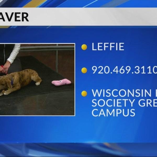 Pet Saver: Leffie