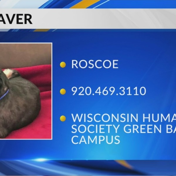 Pet Saver: Roscoe- 13-year-old sweetie