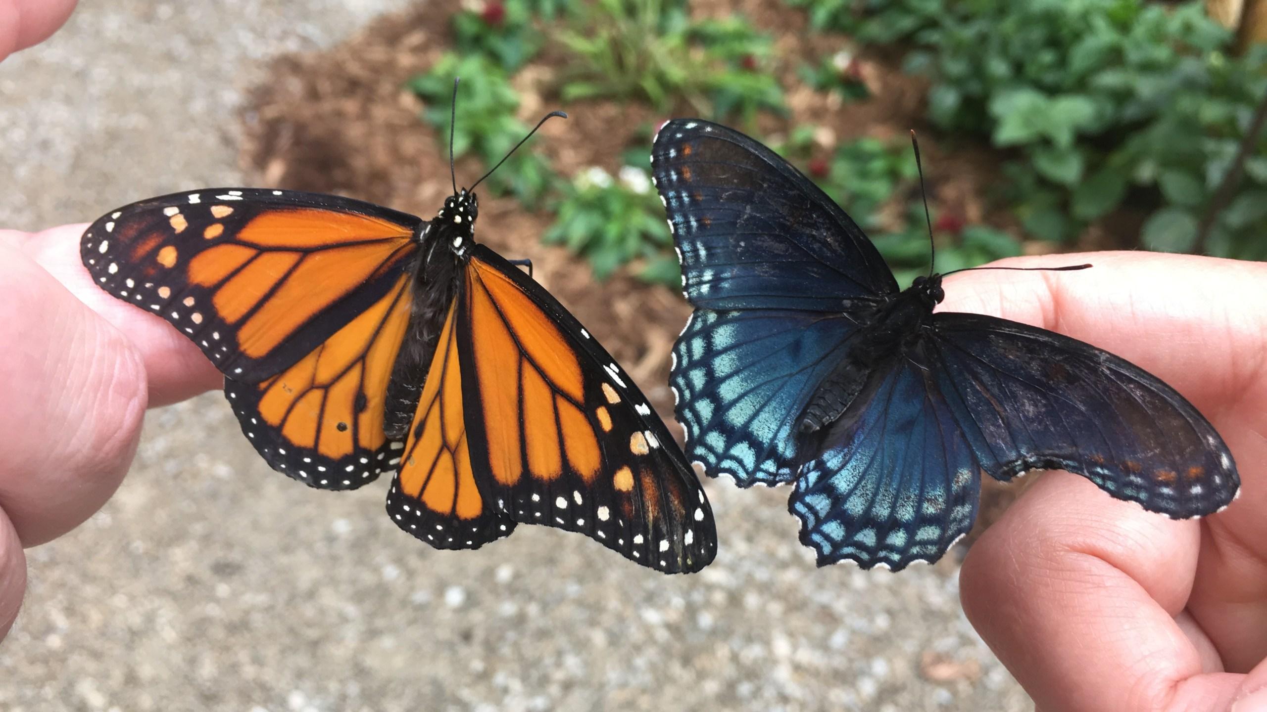 butterfly_1559246017019.JPG