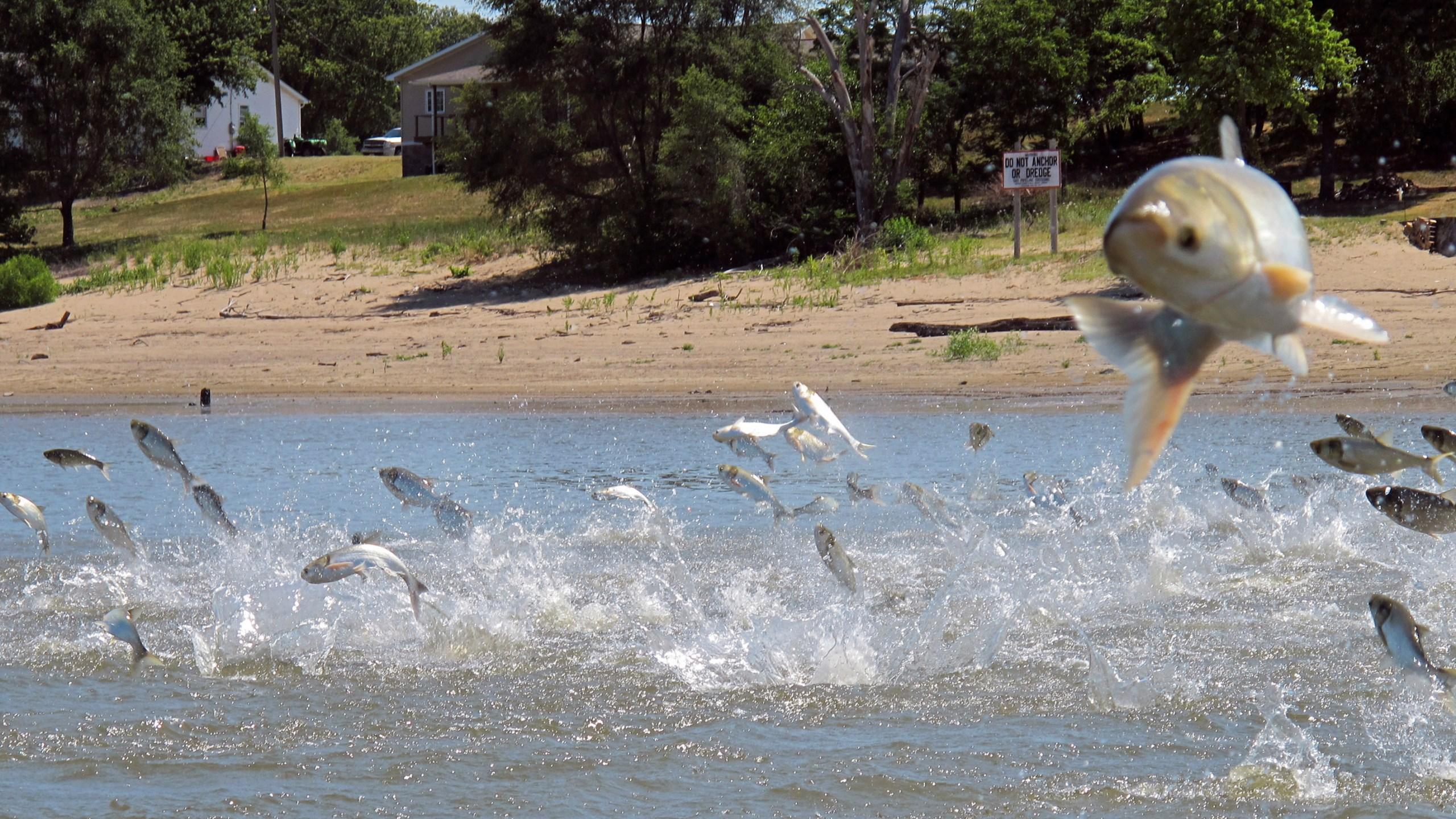Asian Carp Great Lakes_1560554368264