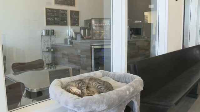 Pawffee Shop Cat Cafe plans Saturday morning grand opening
