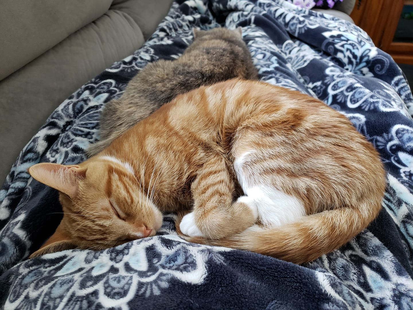 Viewer Photos National Cat Day 2019 Wfrv Local 5 Green Bay Appleton