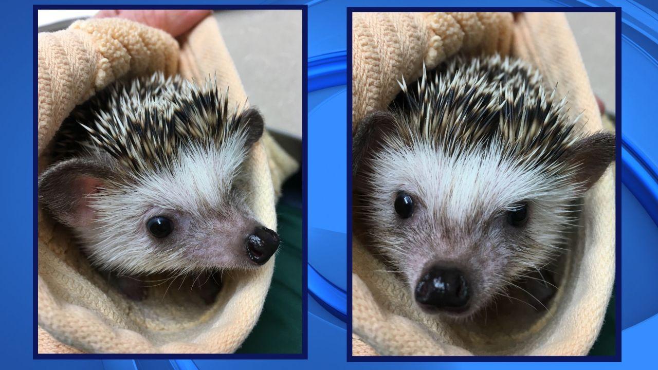UPDATE: Green Bay's Wildlife Sanctuary staff remain concerned after hedgehog stolen